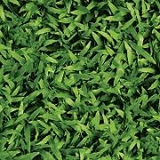 gạch lát sân vườn giả cỏ lá gừng